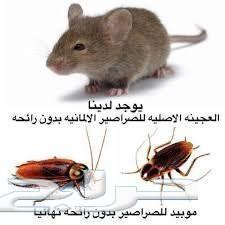 مكافحة حشرات رش مبيد رش مبيدات شركة مكافحة حش