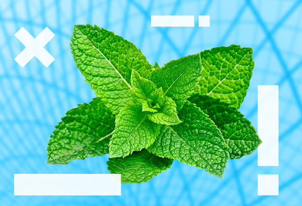 Agenzia web Mint Marketing