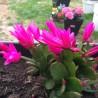 Photo: cactus corail