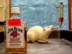Drunken Rat.jpg