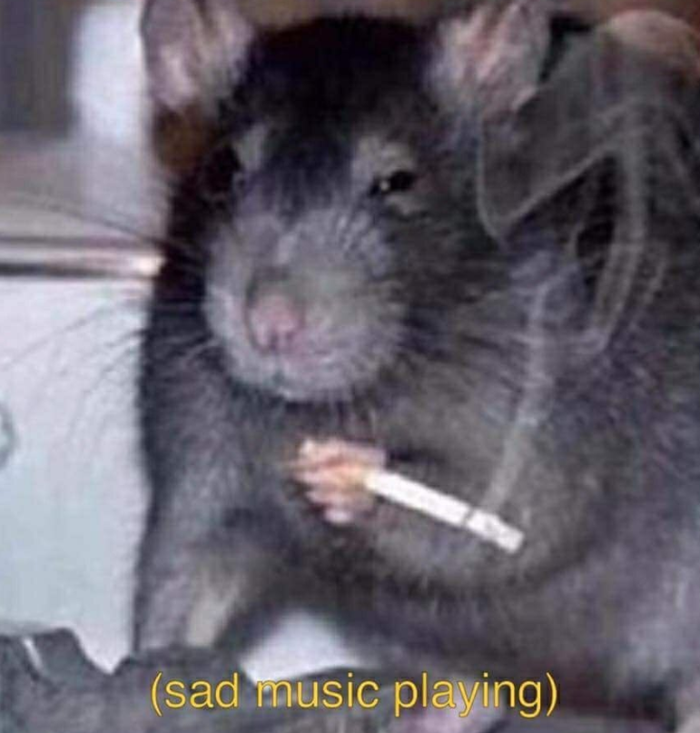 ratto.png