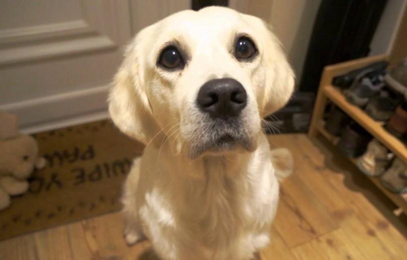 dog-begging-1.jpg