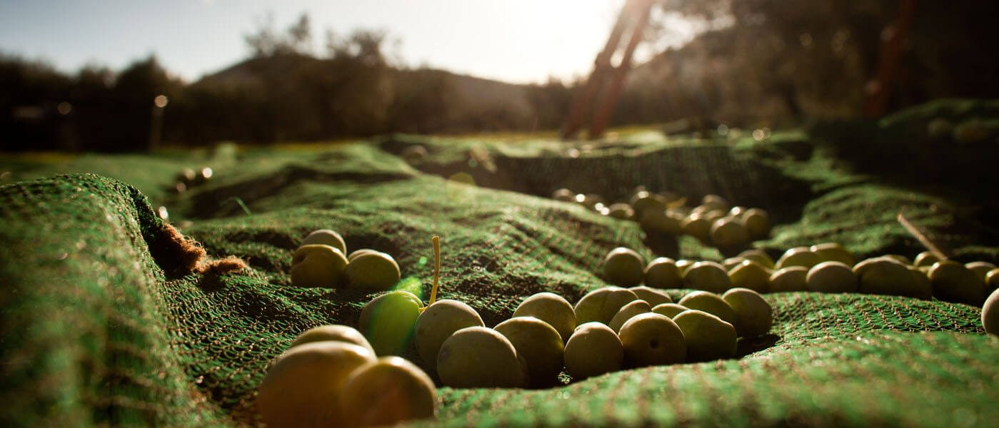 ...from our own land of olive groves to you