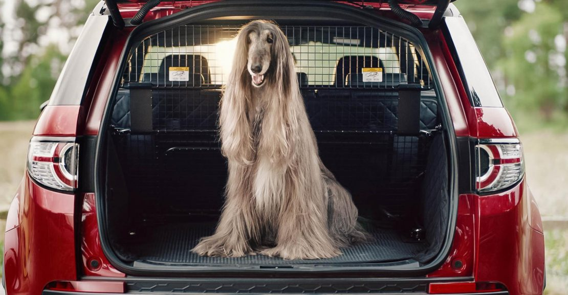 You Can Now Spec Your Land Rover With A Dog Shower
