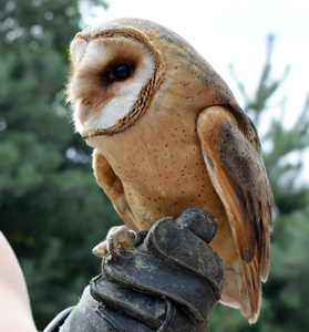 Holding Owl
