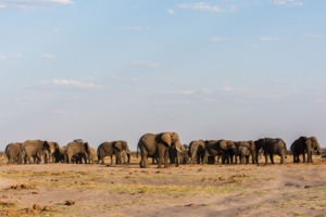 Elephants in Chobe National Park, Botswana