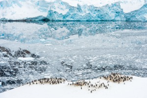 Penguins in Neko Harbour, Antarctica