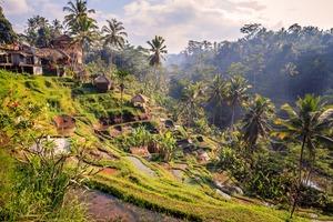 Jungle near Ubud, Bali