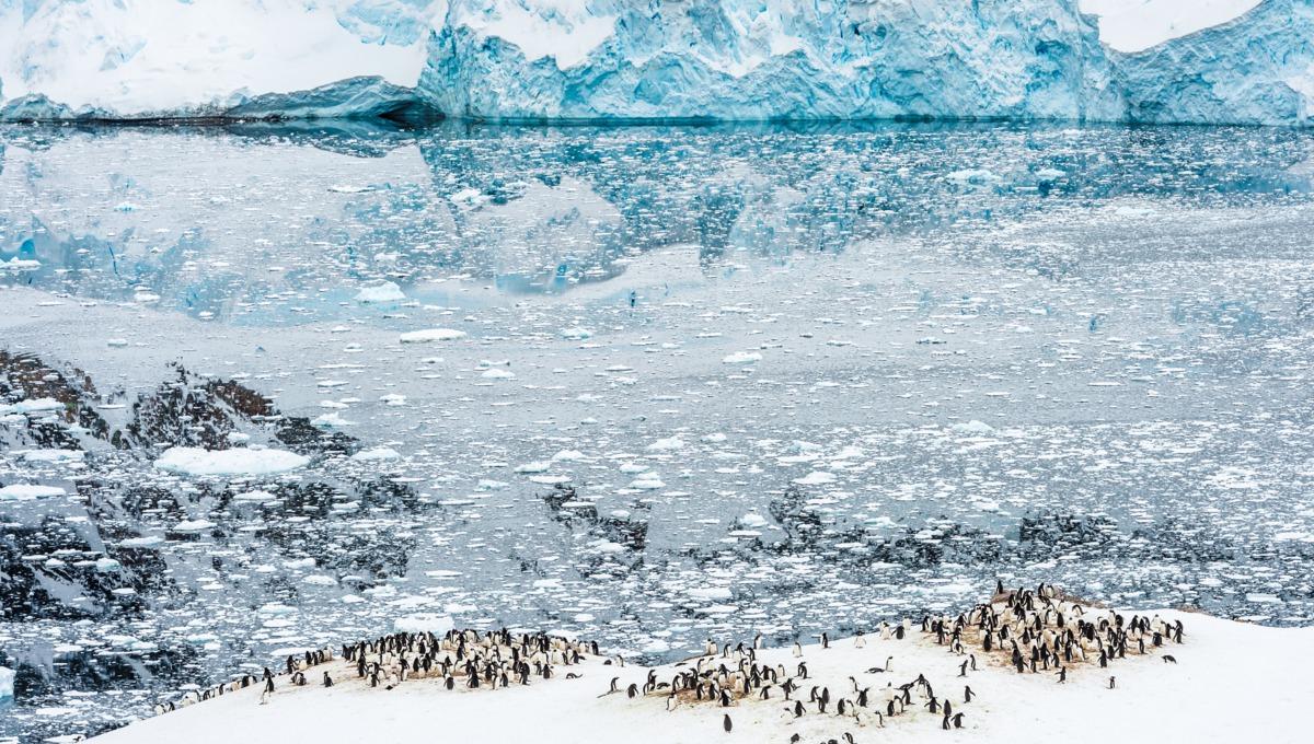 Penguins in Neko Harbour, Antarctica - A true bucket list destination