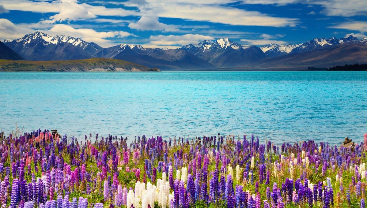 New Zealand cruises - Lake Tekapo