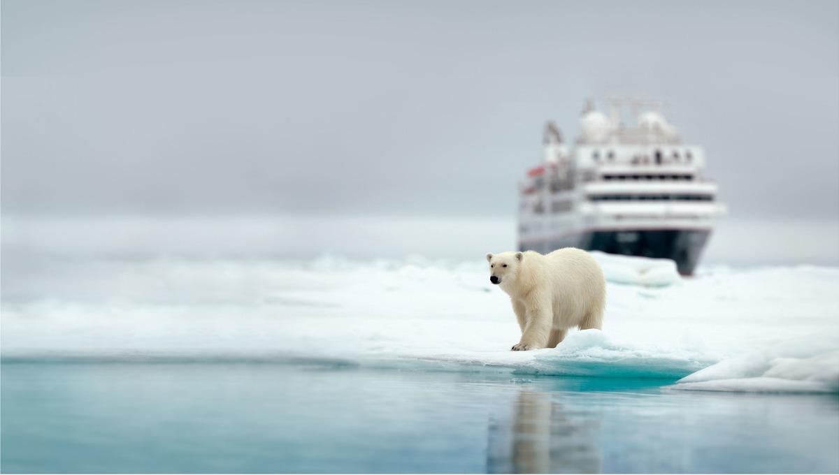 Silver Explorer - Polar bear in the Arctic