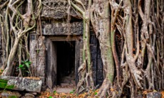 Overgrown doorway at Ta Prohm, Angkor