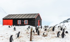Penguins at Port Lockroy, Antarctica