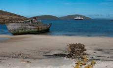Shipwreck on New Island, Falklands