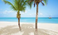 Palm trees on Eagle Beach, Aruba