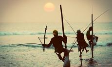 Stilt fishermen near Galle, Sri Lanka