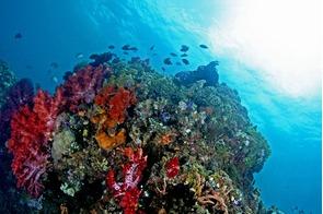 Coral reef near Ambon, Indonesia