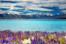 New Zealand cruises - Lake Tekapo