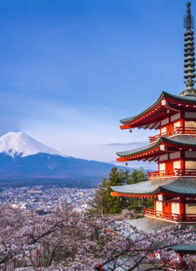 Spring cruise destinations - Mount Fuji during cherry blossom season, Japan