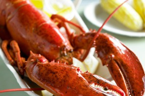 Lobster, Massachussetts