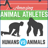 Amazing Animal Athletes: Humans Vs Animals..