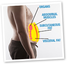 subcutaneous and visceral fat