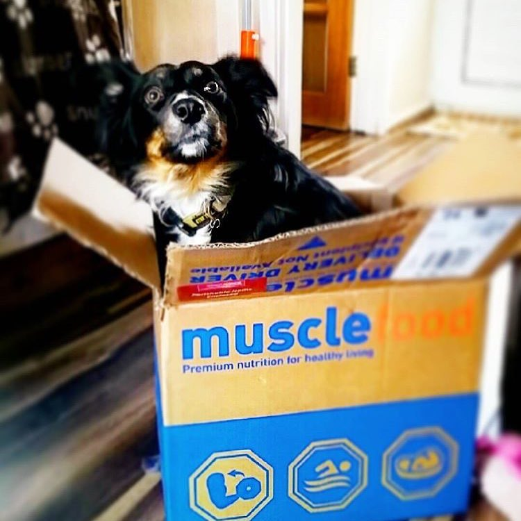 Dog in a Muscle Food box