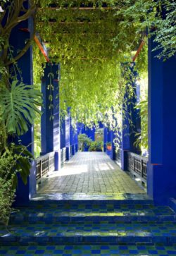 Jardin Majorelle, Marrakech. Photograph by Nicolas Mathéus., © Nicolas Mathéus