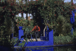 Yves Saint Laurent in the Jardin Majorelle for a story in Paris-Match, Marrakech, November 1983. Photograph by Jean-Claude Deutsch., © Jean-Claude DEUTSCH/PARISMATCH/SCOOP