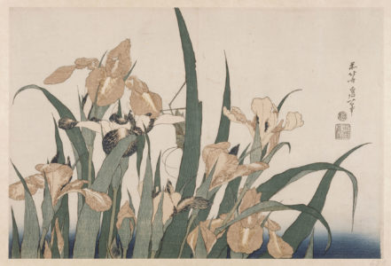 Katsushika Hokusai, Les Iris, série des « Grandes Fleurs », Japon, époque d'Edo (1603-1868), 1833-1834, Paris, musée national des arts asiatiques – Guimet., © Photo RMN-Grand Palais (MNAAG, Paris) / Thierry Ollivier