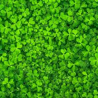 Irish Instrumentals Needed! // Budget TBC