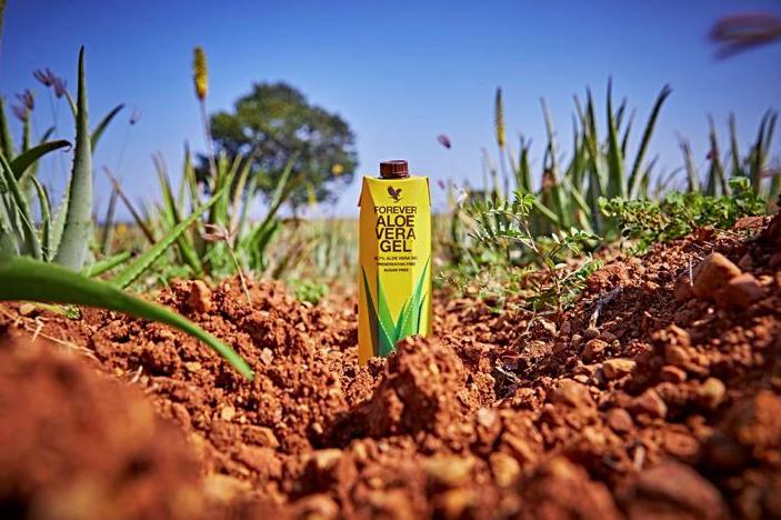 Den nye gule gel på marken.png