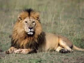 Md lejon