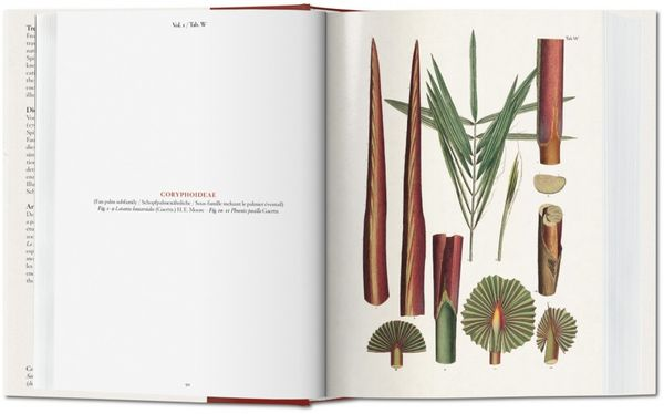 The XL Book of Palms