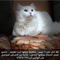 قطة خاليه من الأمراض
