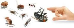 شركة مكافحة حشرات بالرياض0500362606