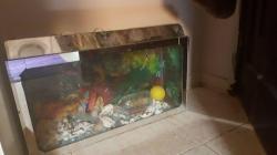 حوض سمك تظيف