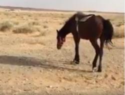 حصان خيل