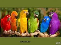 كناري وبلابل وطيور زينه