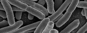 Bacterie in auto