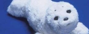Robot zeehond