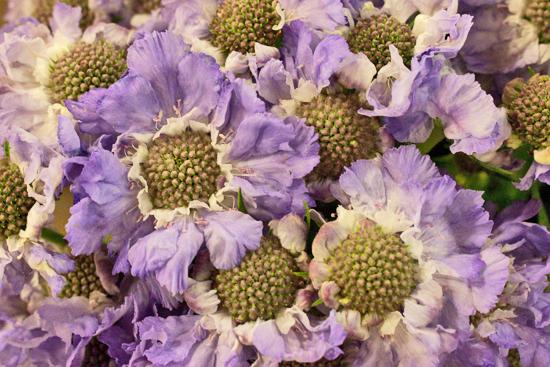 1-New-Covent-Garden-Flower-Market-Flowerona_170929_132901.jpg?mtime=20170929132901#asset:12188