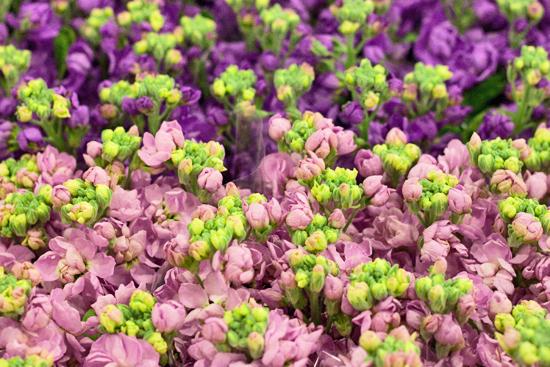 1-New-Covent-Garden-Flower-Market-Flowerona_170929_134042.jpg?mtime=20170929134042#asset:12221