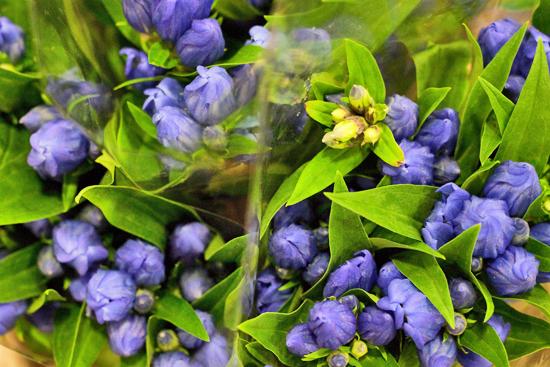 11-New-Covent-Garden-Flower-Market-Flowerona_170929_134048.jpg?mtime=20170929134048#asset:12231
