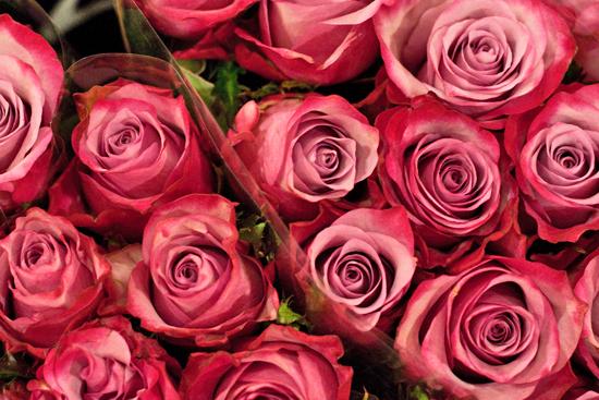 12-New-Covent-Garden-Flower-Market-Flowerona_170929_132911.jpg?mtime=20170929132910#asset:12199