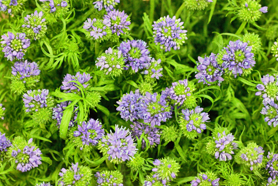 12-New-Covent-Garden-Flower-Market-Flowerona_170929_134049.jpg?mtime=20170929134049#asset:12232