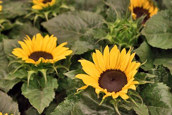 14-New-Covent-Garden-Flower-Market-Flowerona_170929_130926.jpg?mtime=20170929130926#asset:12167