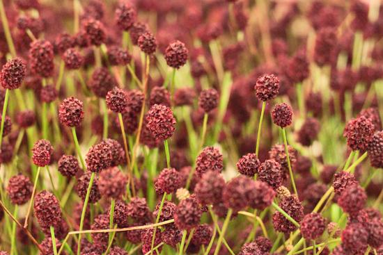 16-New-Covent-Garden-Flower-Market-Flowerona_170929_130928.jpg?mtime=20170929130928#asset:12169