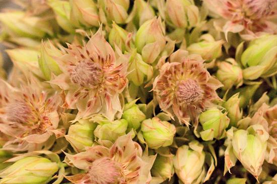 17-New-Covent-Garden-Flower-Market-Flowerona_170929_134053.jpg?mtime=20170929134053#asset:12237