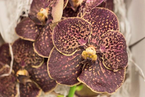 18-New-Covent-Garden-Flower-Market-Flowerona_170929_130930.jpg?mtime=20170929130929#asset:12171